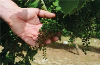 sipcam_italia_prodotti_chimici_vino